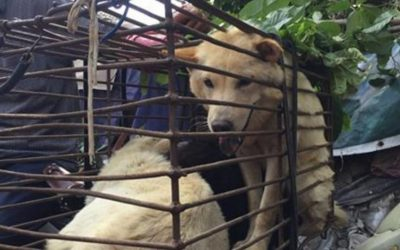 Taiwan Steps Up Their Animal Welfare Laws & Bans Consumption of Cat & Dog Meat