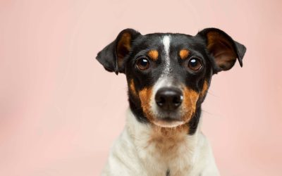 How to get back your Stolen or Rehomed Pet
