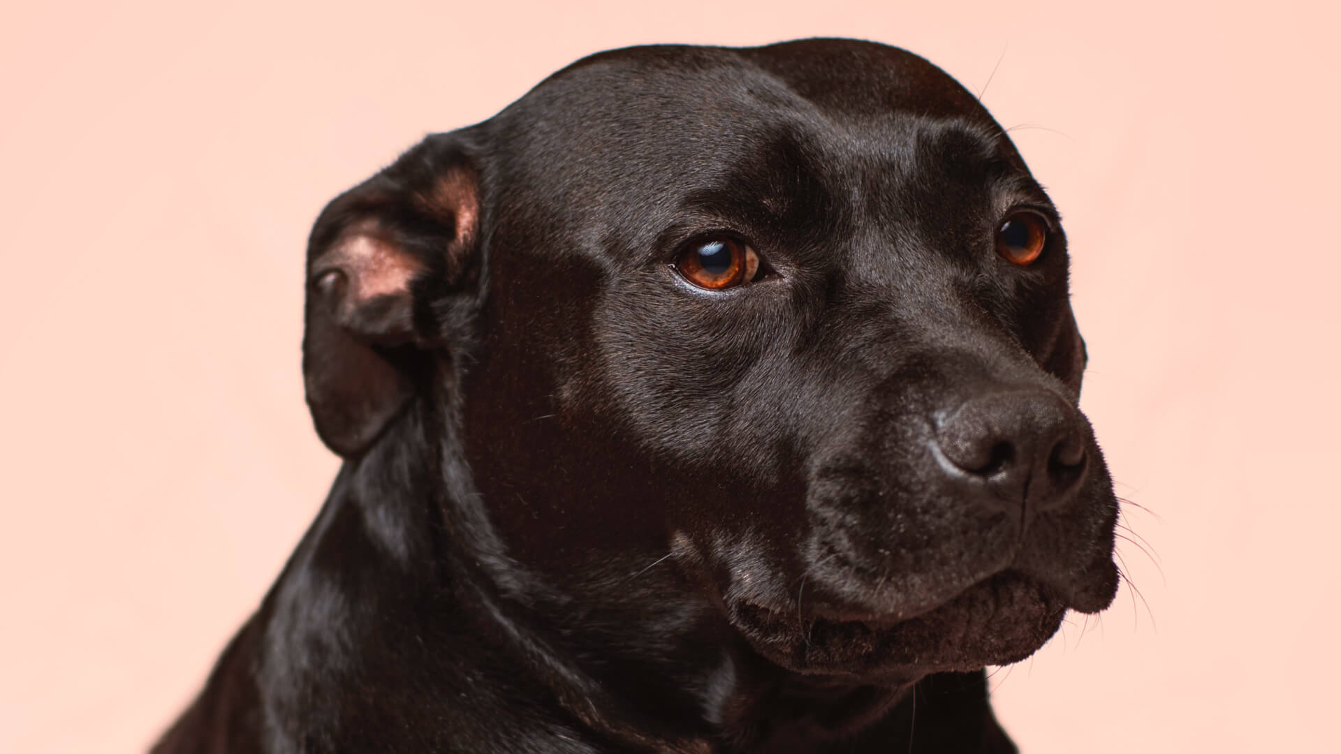 Is your dog fouling indoors