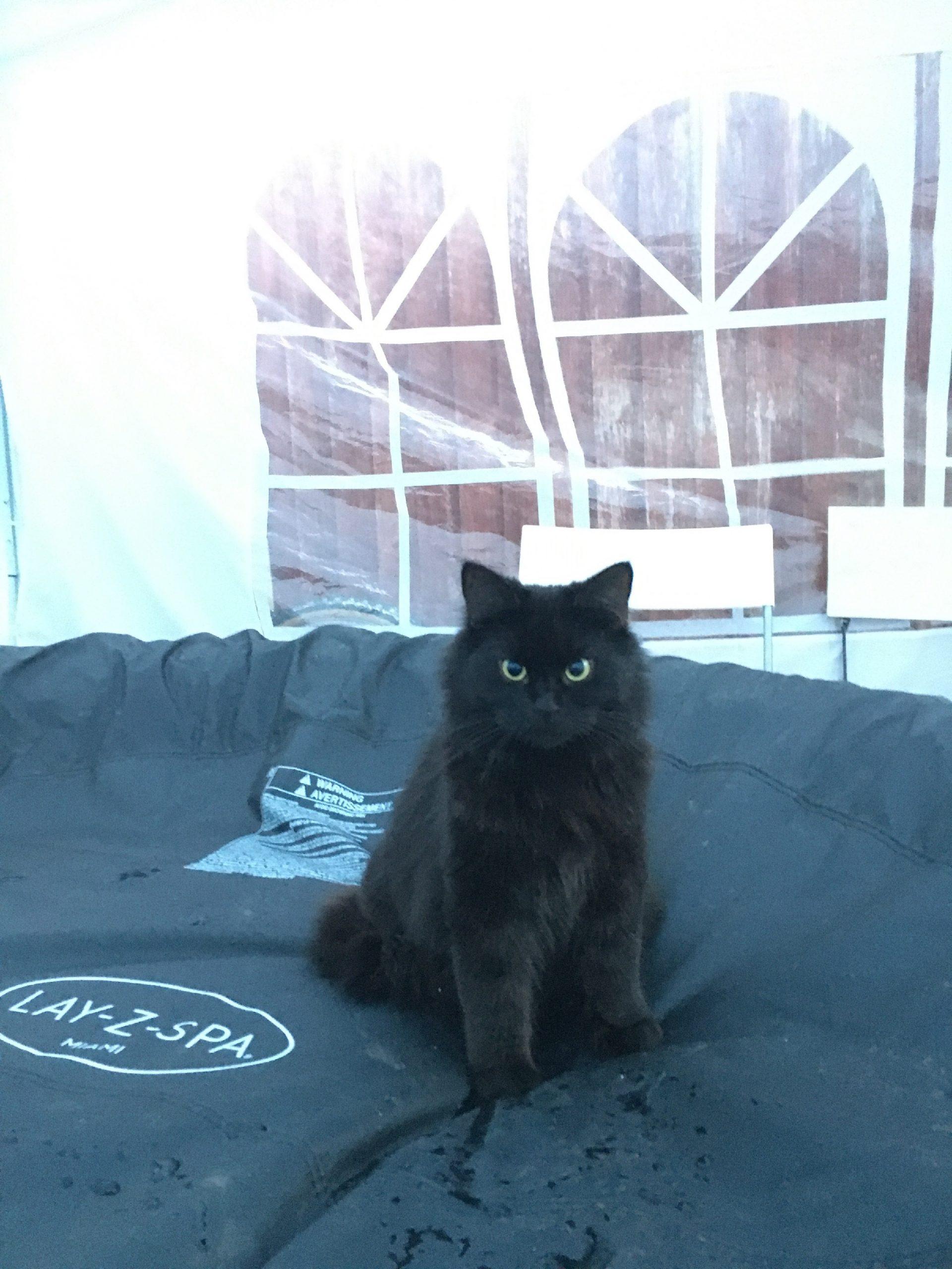Missing cat Skye