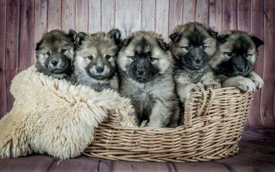 Dog Theft, Keeping Your Dog Safe.