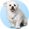 ID tag for dogs - two pet