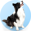 ID tag for dogs - multi pet