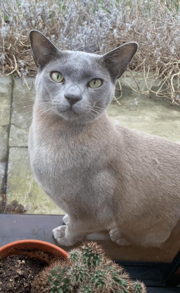 Missing cat Choochoo (2)