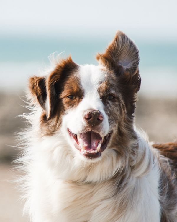 Get the best id tag for your dog